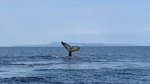 クジラ!!!